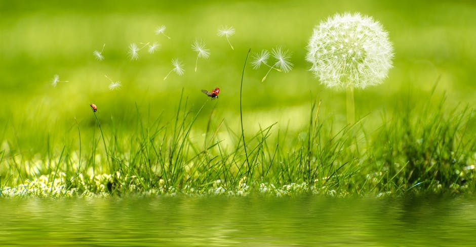 piękny pejzaż przedstawiający łąkę